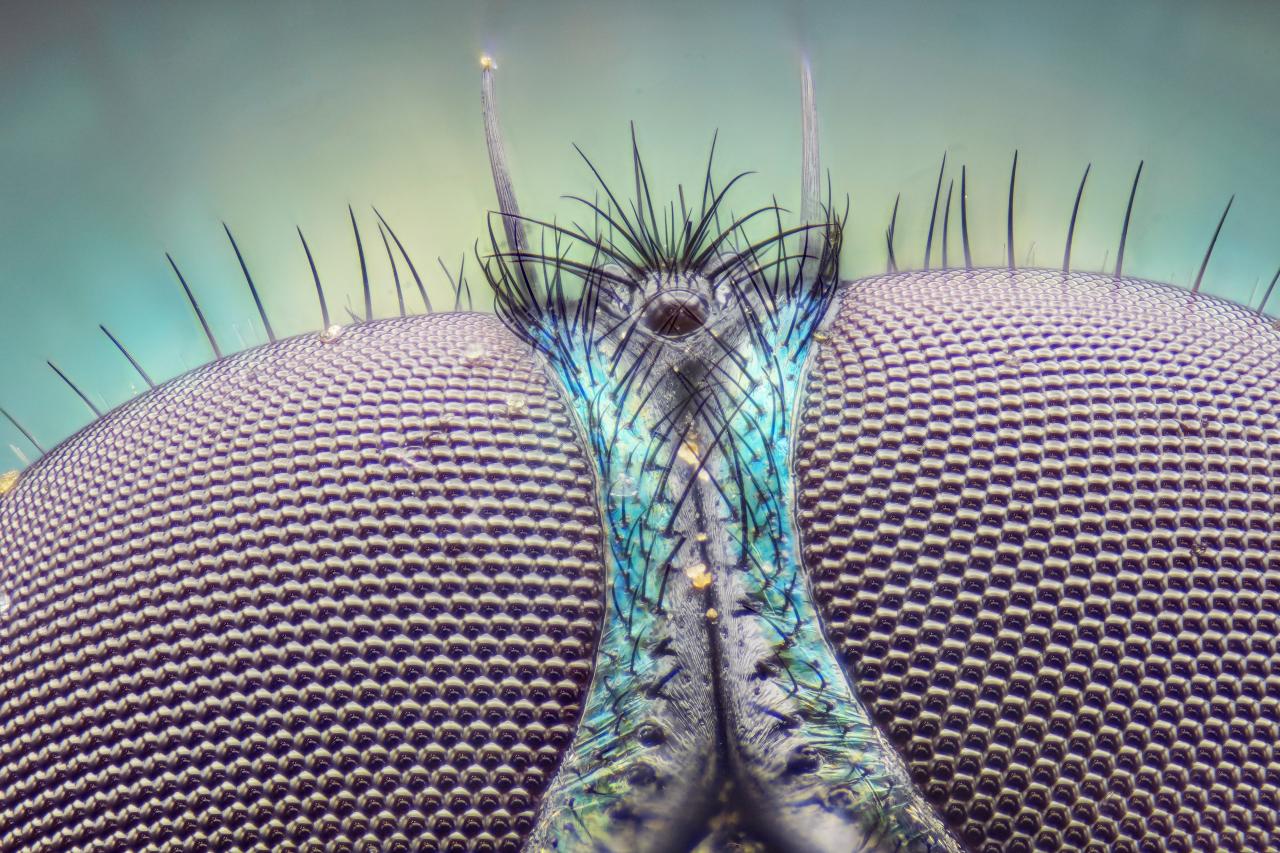 Occhi di mosca a 10X